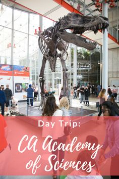 San Francisco: California Academy of Sciences - Hither & Thither San Francisco Vacation, San Francisco California, Science Sans, Places Ive Been, Places To Go, Golden Gate Park, Academy Of Sciences, Adventure Is Out There, Day Trip