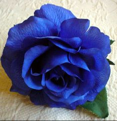 I love exotic flower colors that are outside the norm.  What better than my favorite shade of BLUE?!