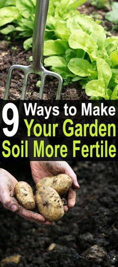 9 Ways to Make Your Garden Soil More Fertile. There are many ways to enhance the dirt you'll be planting your seeds in, none of which cost much money or time. #Homesteadsurvivalsite #Garden #Fertilesoil #Growingyourfood