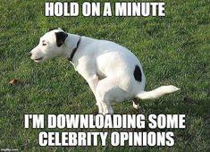 Funny Memes Sarcastic Guys Sarcasm 49 Ideas For 2019 Badass Quotes, Funny Quotes, Funny Memes, Funny Liberal Memes, Liberal Humor, Stupid Liberals, Sarcasm Quotes, Funny Humour, Humor Quotes
