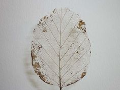 Remove leaf tissue to see a beautiful