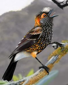 Crested Honeycreeper