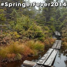#SpringerFever2014 #AppalachianTrail #Trail #AT #BackpackingAT #Backpacking #Hiking #Hike #Latergram #Swamp