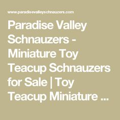 Paradise Valley Schnauzers - Miniature Toy Teacup Schnauzers for Sale   Toy Teacup Miniature Schnauzer Puppies