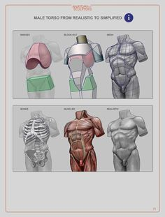 Anatomy For Sculptors: Understanding the Human Figure - Paperback Face Anatomy, Anatomy Study, Anatomy Art, Anatomy Reference, Drawing Reference, Anatomy Organs, Anatomy Images, Heart Anatomy, Pose Reference
