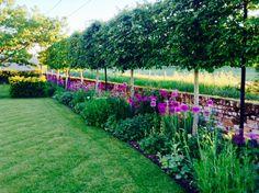 Cool ideas for gardening on a budget - earthwakes House Landscape, Landscape Design, Garden Design, Back Gardens, Outdoor Gardens, Geranium Plant, Garden Hedges, Italian Garden, Garden Structures