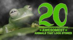 The 20 Awesomest Animals That Look Stoned - http://www.heavy.com/comedy/2012/04/the-20-awesomest-stoned-animals/