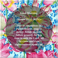 Inspirational Scriptures, Righteousness Of God, King James Bible Verses, Seek The Lord, Romans 12, Prayer Warrior, Old Testament, Verse Of The Day