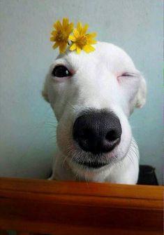 """พวกน้องหมามีอารมณ์ """"ขำ"""" รึเปล่าครับ และเวลาที่คน """"ขำ"""" พวกเค้าจะเข้าใจรึเปล่าว่าคืออะไร - Pantip"""
