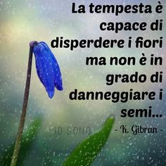 The storm is capable of dispersing the flowers but is not able to damage the sem(Gibran)