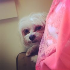Gigi hiding behind me at the vet, adorable =)