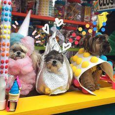 A famosa parada de Halloween em Nova York leva às ruas cachorrinhos fantasiados