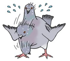 It is a very cute pigeon sticker. Pigeon sticker will attract people. This is bird sticker series of a studio HATO. Funny Drawings, Bird Drawings, Animal Drawings, Cute Pigeon, Pigeon Pose, Amazing Drawings, Easy Drawings, Origami Dove, Wolf Comics