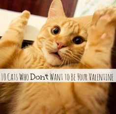 10 Cats Who Don't Want to Be Your Valentine