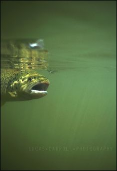 What a great fly fishing picture! #Flyfishing