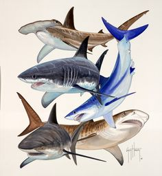 Painting: Guy Harvey  Just wanted to add a little shark to your week.