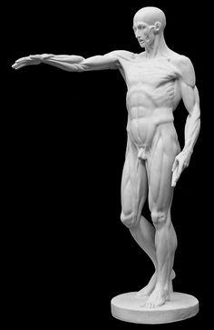 Anatomy of Man #3 by Jean Antoine Houdon