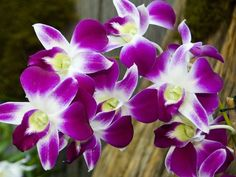 What Type of Flower Are You? You are an orchid! This flower is known for it's unique beauty, and you prefer things that are unique and interesting as opposed to what is popular. Orchids represents love, luxury, beauty and strength. In ancient Greece, orchids were associated with virility.