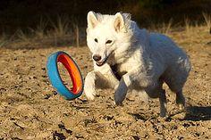 Easy Dogs / Chuckit! Fetch-Wheel – Beschäftigungs-Spaß für Hunde, Easy Dogs Qualitätsscout Nicole Dumke und Christina Opitz