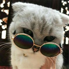 Cool cat sunglasses for your cat - cats love life - cats -. - Cool cat sunglasses for your cat – cats love life – cats – … – cats – - Cute Baby Cats, Cute Cats And Kittens, Cute Funny Animals, Cute Baby Animals, Cool Cats, Kittens Cutest, Funny Cats, Gatos Cool, Cat Sunglasses
