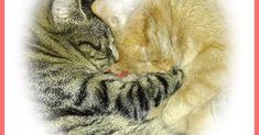 Słodkie kocie fotki dla każdego Animals, Animales, Animaux, Animal, Animais