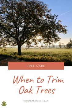 When to Trim Oak Trees - Pruning Oak Trees - What season to prune oak trees in (and why) Pruning Plants, Tree Pruning, Summer Trees, Winter Trees, Fruit Trees, Trees To Plant, How To Trim Bushes, Live Oak Trees, Privacy Landscaping