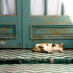 Calico Cat and Her Friends, Bahia Palace, Marrakesh, Morocco