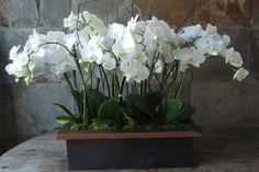 Massive short Phalaenopsis orchid plants in an elegant wooden box. Great for foyers, entry ways on a side table etc. Orchid Centerpieces, Orchid Arrangements, Orchid Pot, Orchid Plants, Asian Party Decorations, Wedding Decorations, Balcony Plants, Outdoor Plants, Potted Plants