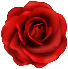 image of clip art red rose 7092 red roses clip art images free rh pinterest com red rose clipart png red rose clip art free