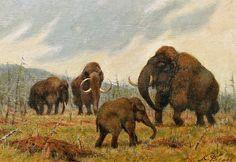 mammoth.gif 800×550 Pixel