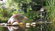 Koi Dome Provides Pond Fish a New Perspective - http://www.cflas.org/koi-dome-provides-pond-fish-a-new-perspective