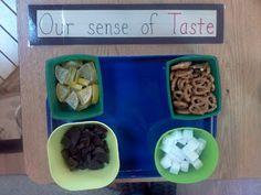 Montessori Design: Sense of taste Body June Maria Montessori, Montessori Science, Montessori Practical Life, Montessori Classroom, Kindergarten Science, Preschool Lessons, Preschool Worksheets, Preschool Garden, Montessori Education