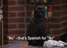 27 Times Salem The Cat Said What You Were Thinking