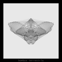 bombus terrestris .insecta collection #generativeart made with #processing.