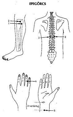 ábra Acupressure, Acupuncture, Ayurveda, Math, Health, Math Resources, Mathematics