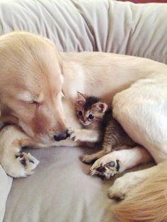 猫と犬の仲良し画像 12|ねこLatte+