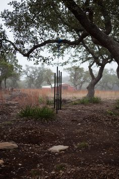 Hanging chimes at our future outdoor wedding ceremony site. Foggy morning in the Texas Hill Country!