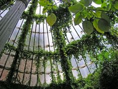 Canopy (Van in LA) Tags: 2005 madrid glass sunshine ivy vine conservatory septem… Green Aesthetic Tumblr, Colorfull Wallpaper, Plant Aesthetic, Nature Aesthetic, Journal Aesthetic, Aesthetic Drawing, Aesthetic Boy, Slytherin Aesthetic, Slytherin Pride