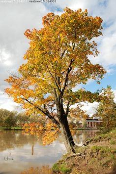 Syksy - Autumn, Vanhankaupunginkoski, Helsinki, Finland / vastavalo.fi