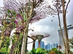"""Garden City – If you're headed to Singapore this year you'll want to check out their groundbreaking Gardens by the Bay complex. It features the jaw-dropping, solar-powered """"supertrees"""", also home to baobabs, Madagascan ghost trees, woolly cactus and other globe-spanning plants. Photo credit: Josh Alexander #VirtuosoTravel #Travel #Singapore #Asia #Gardensbythebay #supertrees #solarpowered . . . . . . . . . . #instatravel #wanderlust #traveling #vacation #travelphotography #luxury #luxurylife…"""