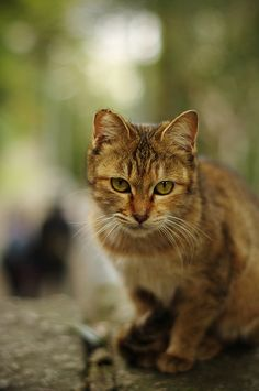 a cat of an approach by yuuukiii, via Flickr