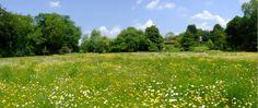 Wildflower Meadow Panorama