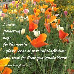 Flowering hopes for the world .... See the Big Joy documentary  www.bigjoy.org