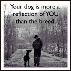 Shared from Big Z Dobermans
