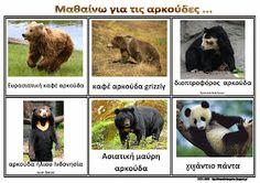 Πινακας αναφορας οι αρκουδες