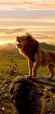The Lion King, king of jungle, movie Simba wallpaper - The Lion King, king of jungle, movie Simba wallpaper various kinds of animals in wild life by huntingwe as humans must be able to preserve and preserve nature and its contents for a better life The Lion King, Lion King Art, Lion King Movie, Lion King Simba, Disney Lion King, Lion Live Wallpaper, Animal Wallpaper, Disney Wallpaper, Wallpaper Jungle