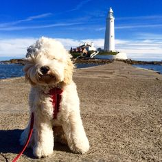 Our office junior loves St Marys Lighthouse (St Marys Island). VW Deluxe Weddings chauffeur driven VW Campervan wedding hire in Northumberland, Tyne and Wear and Durham.