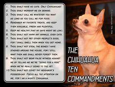 The Chihuahua Ten Commandments