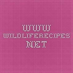 www.wildliferecipes.net