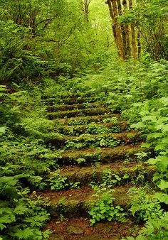 A Path To Somwhere
